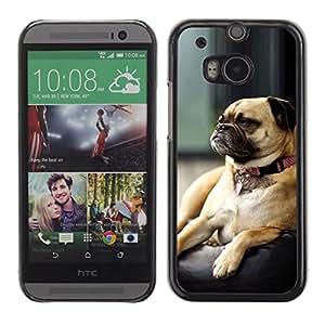 TECHCASE**Cubierta de la caja de protección la piel dura para el ** HTC One M8 ** Pug Grumpy Dog Small Brown Sleeping Cute