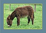 Know Your Donkeys & Mules (Old Pond Books) 35