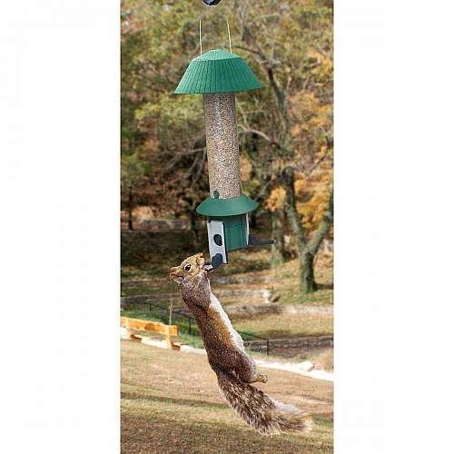Songbird Essentials SE981 Squirrel Defeater Nut Feeder (Set of 1) (Songbird Essentials Squirrel)