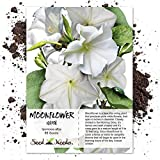 Seed Needs, White Moonflower (Ipomoea alba) 65 Seeds