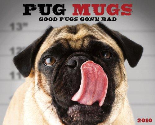 Pug Mugs 2010 Calendar: Good Pugs Gone Bad