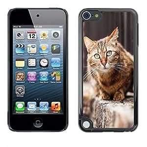 Caucho caso de Shell duro de la cubierta de accesorios de protección BY RAYDREAMMM - Apple iPod Touch 5 - House Cat Shorthair British Street Furry