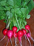 500+ Radish Seeds- Cherry Belle Radish