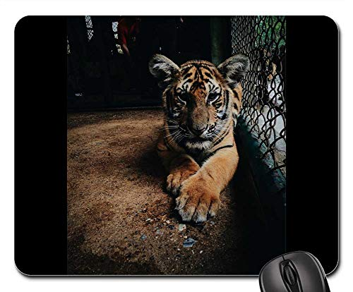 Mouse Pad - Tiger Zoo Cage Mammal Wildlife Animal Cat Wild