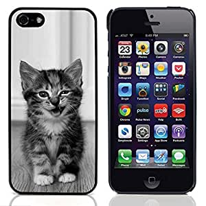 Graphic4You Baby Cat Animal Design Hard Case Cover for Apple iPhone 5 & 5S