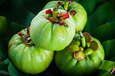 Naang Garcinia Cambogia Pure Extract 500mg Weight Loss