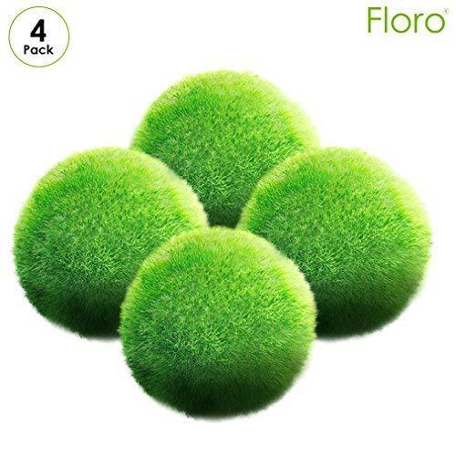 "Floro 4 Large Marimo Moss Balls - All Natural 1"" Round Aquatic Plants for Terrariums - Low-Maintenance, Living Algae for Beginner Gardener - Unique, Exotic Plant for Experienced Horticulturist"