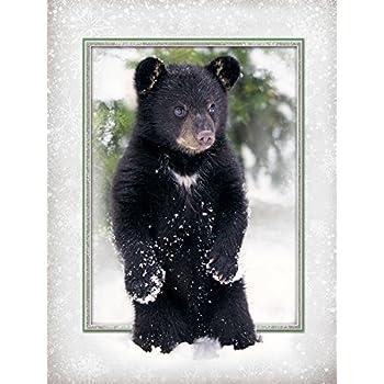 amazon com baby bear christmas cards greeting cards office