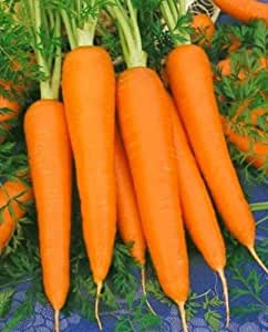 Carrot Seed, Danvers 126, Heirloom Carrot Seed, Non-Gmo Carrots, Delicious 100ct