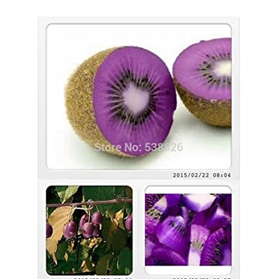 Rare Heirloom Organic Purple Kiwi Fruit Seeds, Professional Pack, 50 Seeds / Pack, Tasty Sweet Delicious Outdoor Fruit