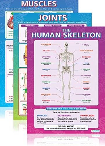 The Human Body Poster Pack (2) - Set of 3 | Science Classroom Posters | Gloss Paper measuring 33