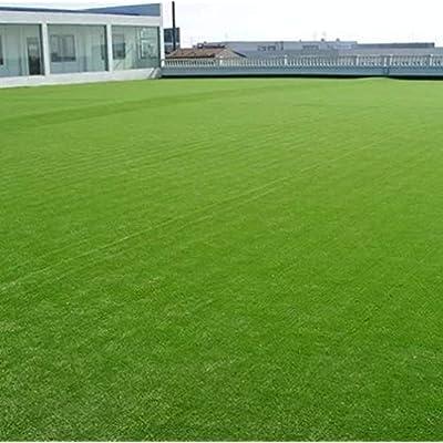 500 Grass Seeds Lawn Seed Perennial Evergreen Ground Cover Green Plant Decorative Grass for Garden Bonsai : Garden & Outdoor