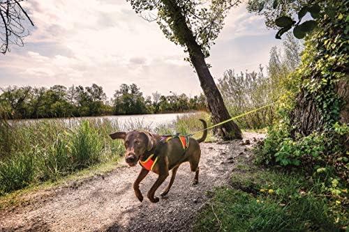 Julius-K9 Arnés de Mantrailing para Perros, Naranja, L: Amazon.es ...