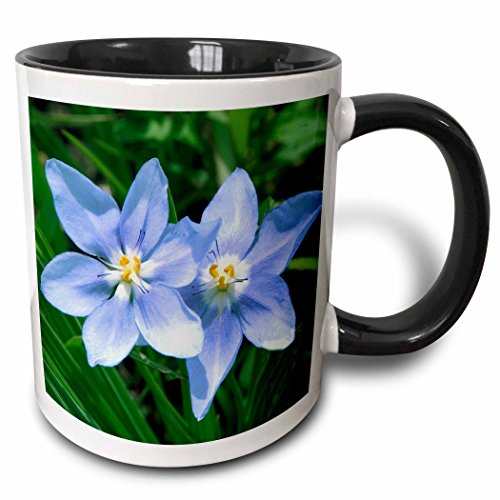 (3dRose Danita Delimont - Michael Scheufler - Flowers - USA, Kansas, Prairie Flower. - 15oz Two-Tone Black Mug)