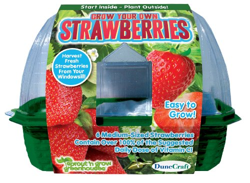 DuneCraft Sprout 'n Grow Greenhouses Strawberries