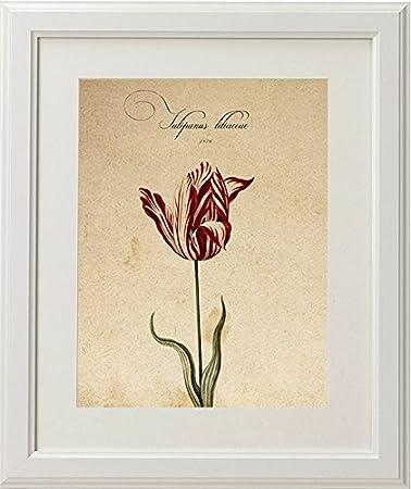 Pack de láminas Red One. Tres láminas tamaño A4. Posters con imágenes de botánica. Decoración de hogar. Láminas para enmarcar. Papel 250 Gramos: Amazon.es: ...