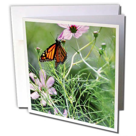 (3dRose Wild Blackberry Studio - Nature - Butterfly sips nectar from some pink cosmos flowers - 6 Greeting Cards with envelopes (gc_280090_1))