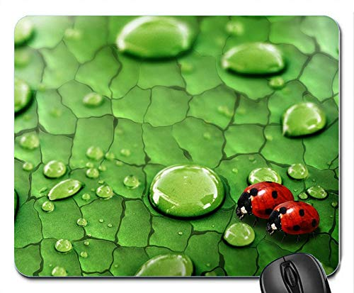 Raindrops on Green Leaf and Ladybug New Design Rubber Computer Mouse PAD Mat