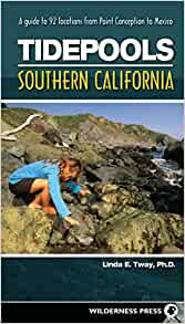 Tidepools Southern California A Guide To 92 Locations From Point Conception To Mexico