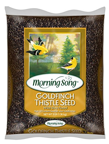 Morning Song 12000 Goldfinch Thistle Seed Wild Bird Food, 3-Pound ()