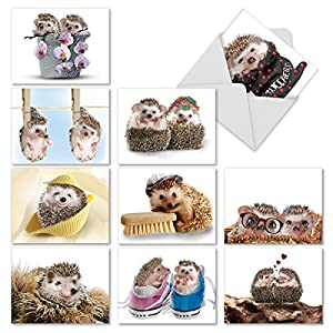 M6541OCB Cards From The Hedge: 10 Assorted Blank All-Occasion Note Cards Featuring Sweet and Cuddly Hedgehogs in Unexpected Places, w/White Envelopes.