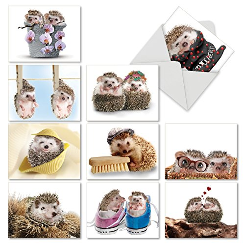The Hedge: 10 Assorted Thank You Note Cards Featuring Sweet and Cuddly Hedgehogs in Unexpected Places, w/White Envelopes. (Cuddly Sweet)