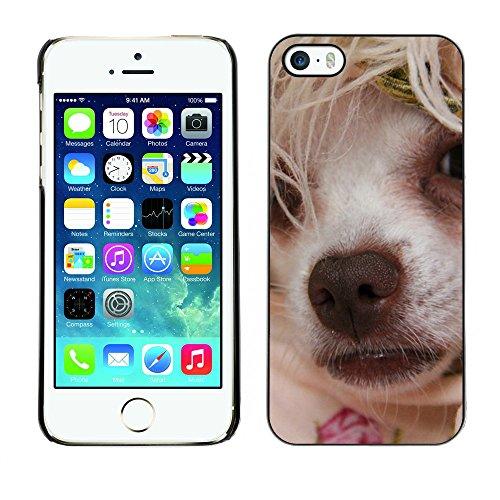 Premio Sottile Slim Cassa Custodia Case Cover Shell // F00007886 petit chien // Apple iPhone 5 5S 5G