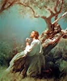 Jesus Christ Praying At Gethsemane Picture Art Print Poster (16x20)