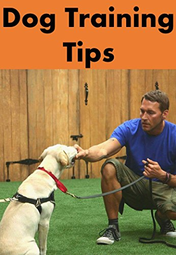 Dog Training Tips: Puppy training guide