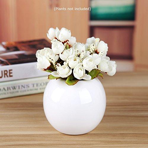 Guo's Cute Plants Vase Decorative Bud Vase Succulent Pots Storage Jars Various 7 Colors (One White) ()