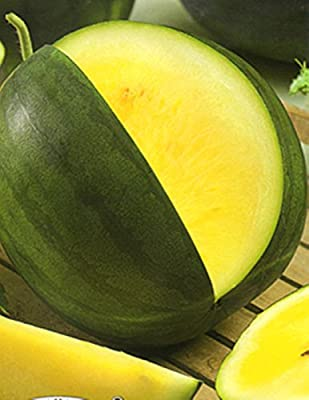 Rare Seeds Watermelon Yanusyk Organic Russian Heirloom Watermelon Seed