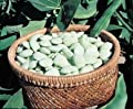 David's Garden Seeds Bean Lima Early Thorogreen DN126 (Green) 100 Heirloom Seeds