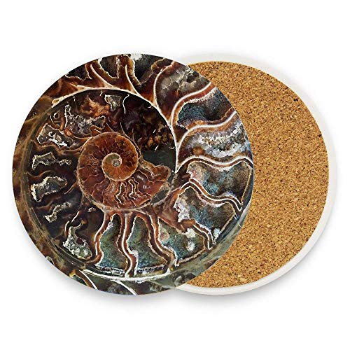 Ptrfedss Fossilized Shell Coaster for Drinks, Ceramic Round Cork Trivet Heat Resistant Hot Pads Table Cup Mat Coaster Pack Of 1