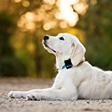 Tractive GPS 3G Pet Tracker for Dogs and Cats - waterproof pet finder for collar attachment