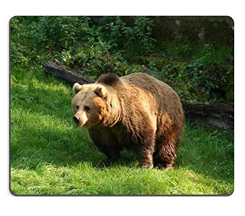 Flying Pig Men Creativity Mousepad Gaming Mouse Pad Grizzly Bear Natural Rubber Material