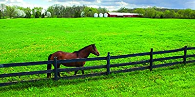 South-Atlantic Transitional Horse Pasture Seed Blend