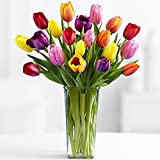 Fresh Cut Multi Colors Tulips 20 (With a Free Vase!)