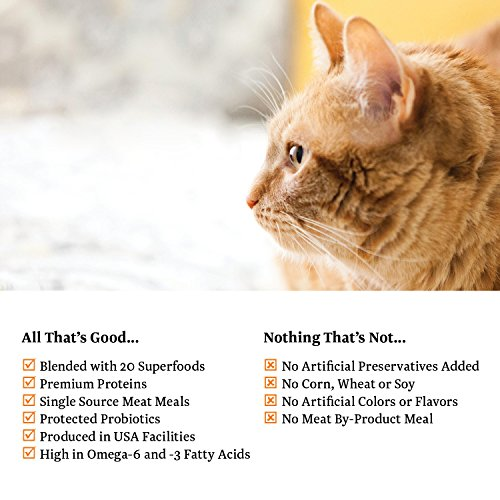 Grain Free Food For Diabetic Cats