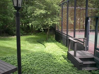 Classy Groundcovers - Pachysandra terminalis {50 Bare Root Plants} by Classy Groundcovers (Image #7)