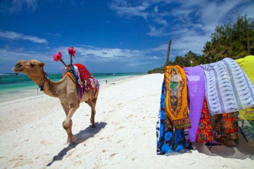 Diani Beach, South Coast near Mombasa, Kenya, Sales Stall for Kangas (African Garments) with Camel Giclee Art Print Poster or Canvas