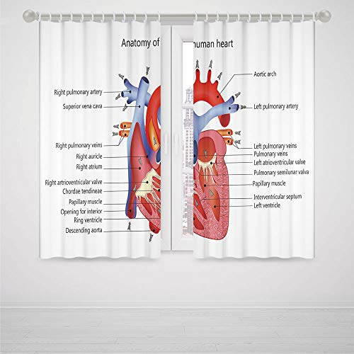 kamisco five nights freddy anatomy products