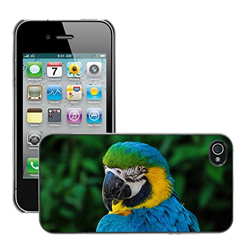 Bild Hart Handy Schwarz Schutz Case Cover Schale Etui // M00133689 Parrot bunten Gefieder Portrait // Apple iPhone 4 4S 4G