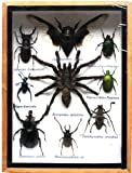 REAL MIXS VERY RARE INSECT TAXIDERMY SET IN BOXES DISPLAY FOR COLLECTIBLES