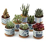 Cheap T4U 3 Inch Ceramic Japanese Style Serial succulent Plant Pot/Cactus Plant Pot Flower Pot/Container/Planter Full colors Package 1 Pack of 8