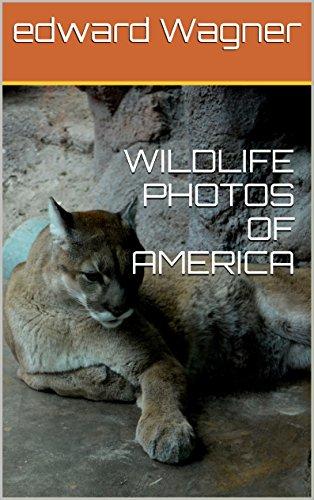 WILDLIFE PHOTOS OF AMERICA (Whitetail Hawk)