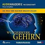 Wunderwerk Gehirn. Die Welt der kleinen grauen Zellen | Irene Klünder,Frank Schüre Uwe Springfeld
