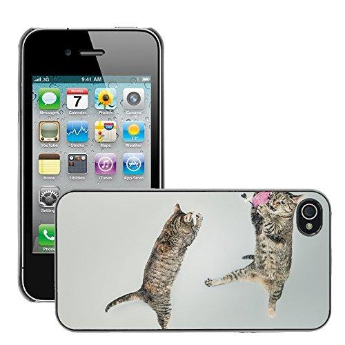 Bild Hart Handy Schwarz Schutz Case Cover Schale Etui // M00134809 Katzen Wechseln playful Feline // Apple iPhone 4 4S 4G