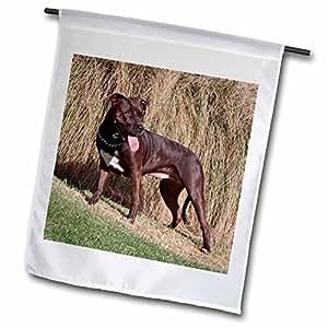 fl_88782_1 Danita Delimont - Dogs - An American Pitt Bull Terrier dog - US05 ZMU0083 - Zandria Muench Beraldo - Flags - 12 x 18 inch Garden Flag