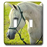 Danita Delimont - Animals - Egyptian, Davenport Arabian stallion - Light Switch Covers - double toggle switch (lsp_230513_2)