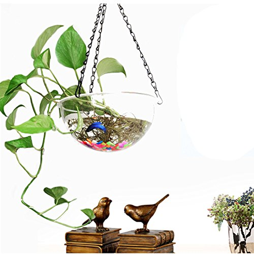 Wall Hanging Bubble Fish Tank Home Decoration Wall Mounted Acrylic Aquarium Bowl with Iron Chain and Rack, Large